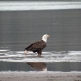 Eagle.Profile